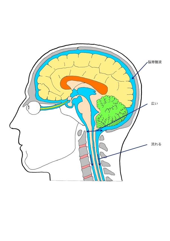 頭のイラスト