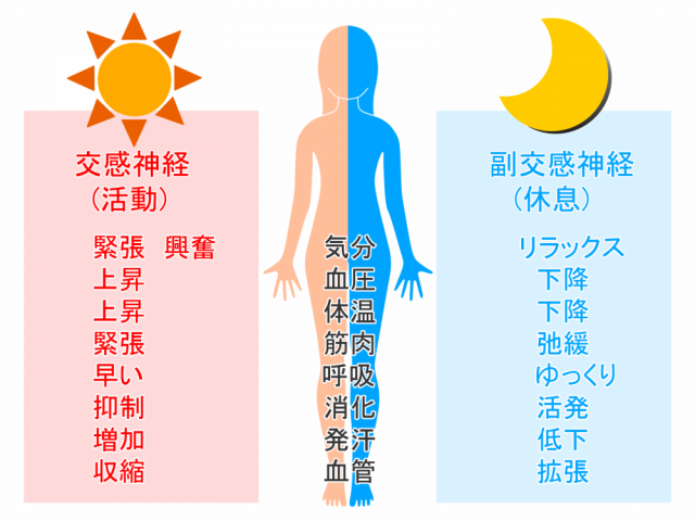 体液循環の改善イラスト