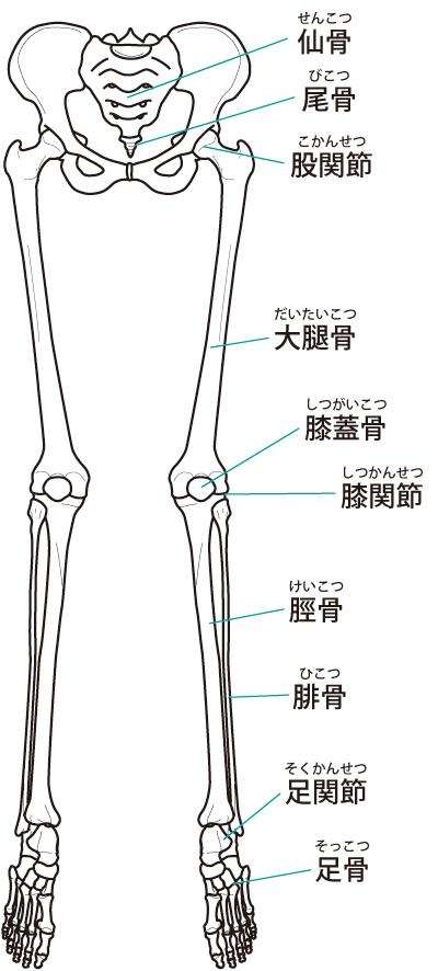 下肢のバランス